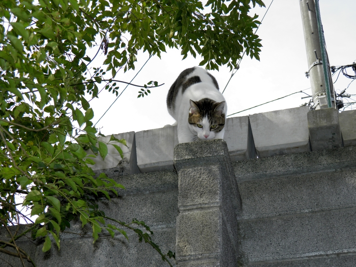 かなた 猫