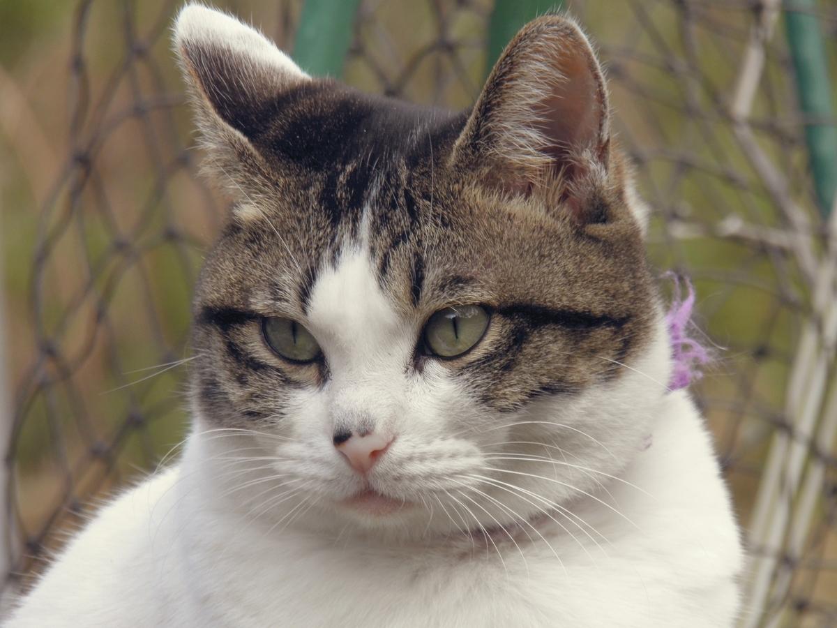 ブリエの写真 猫の写真