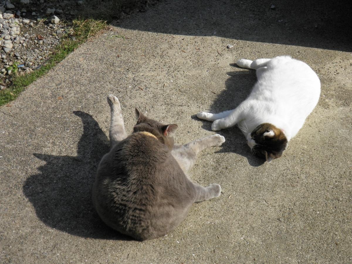 アンジェロとブリエの写真