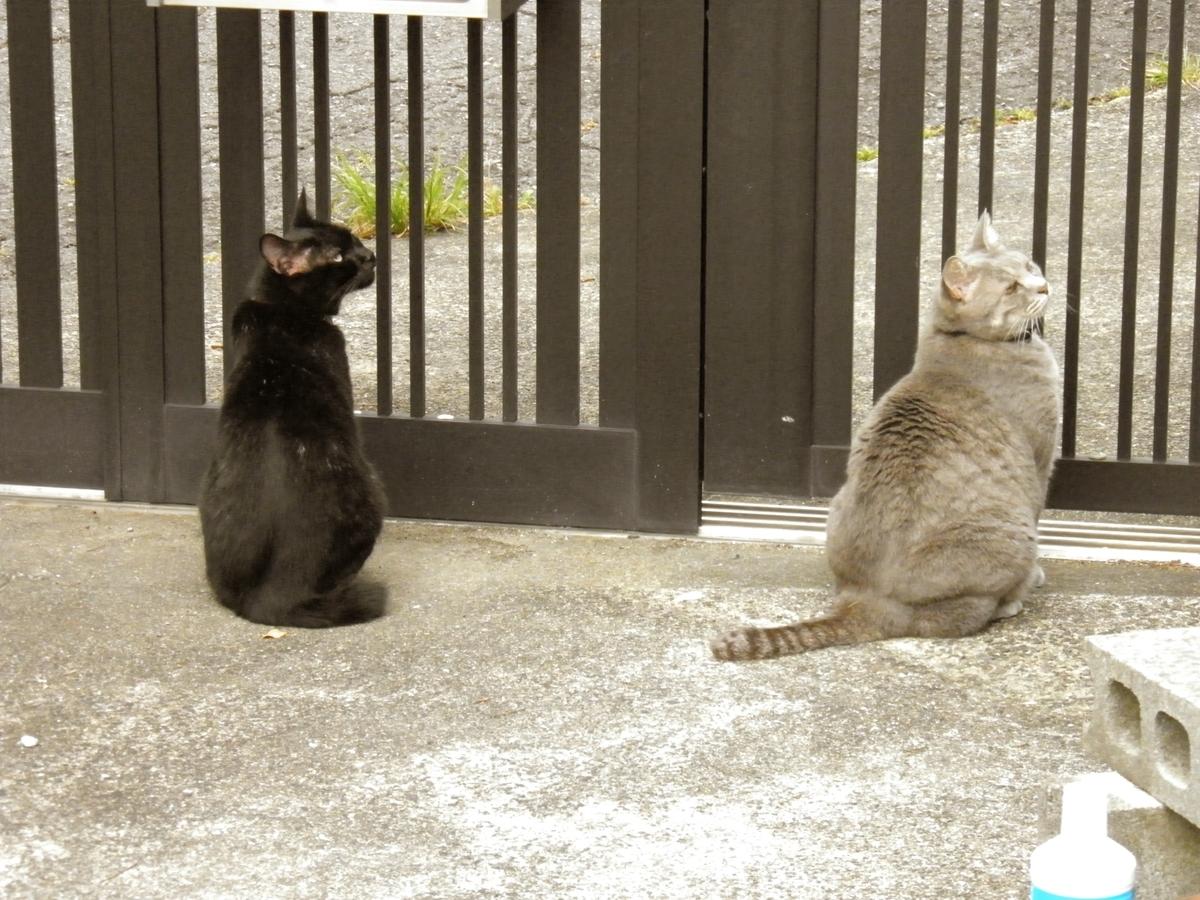 門の外を見るクロネコ祐希とキジ猫アンジェロ