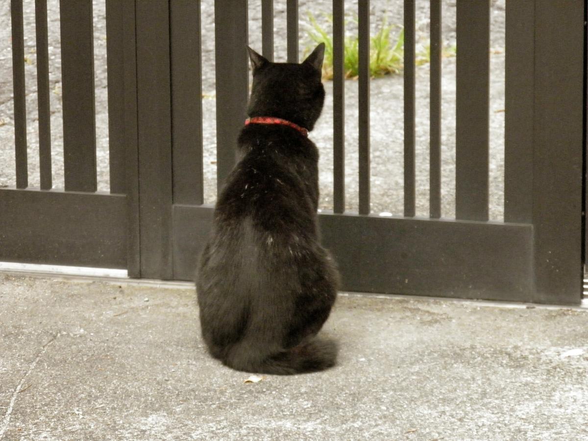 門の外を見るクロネコ祐希