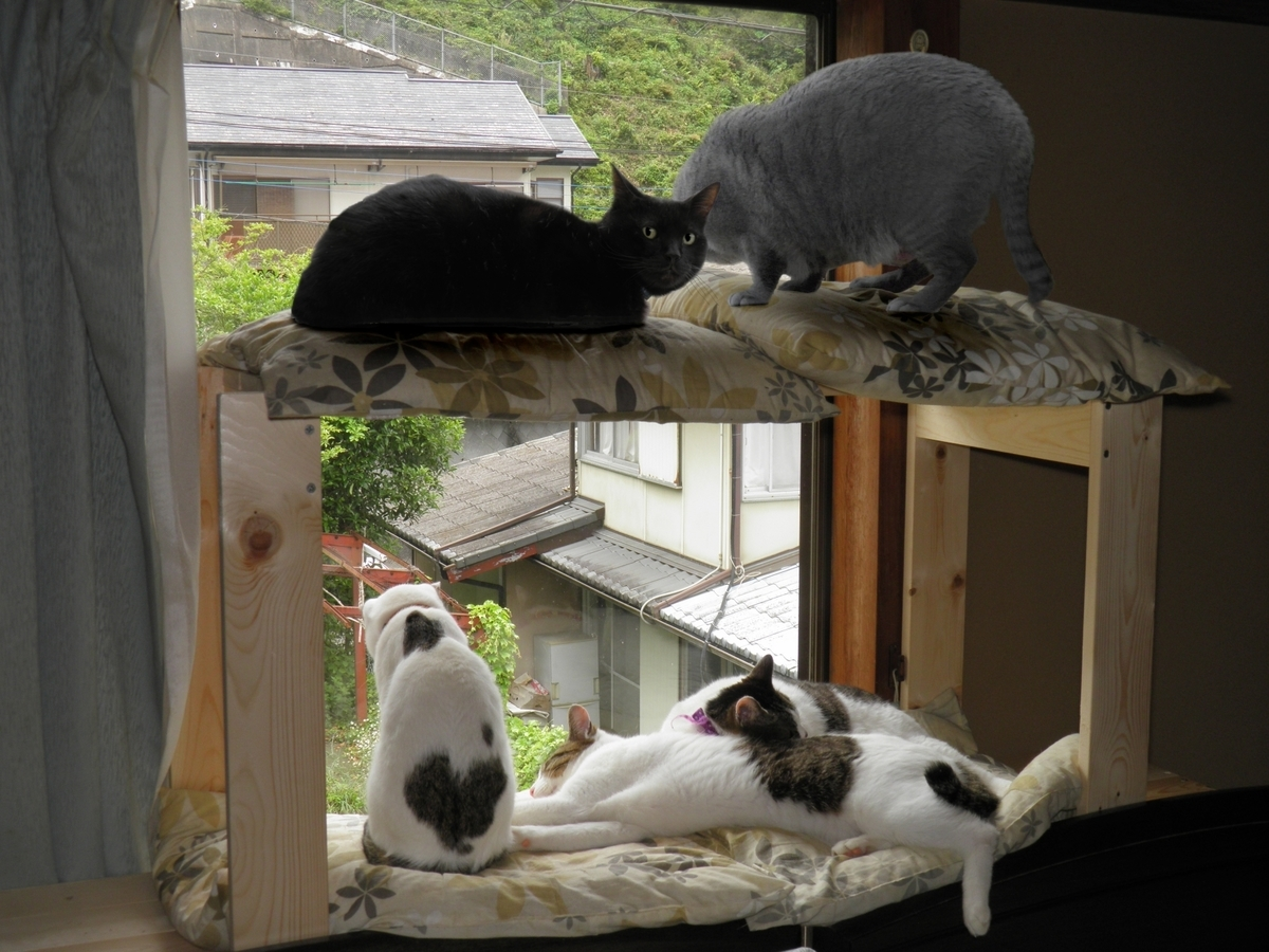 飼い猫5匹が勢揃いの写真