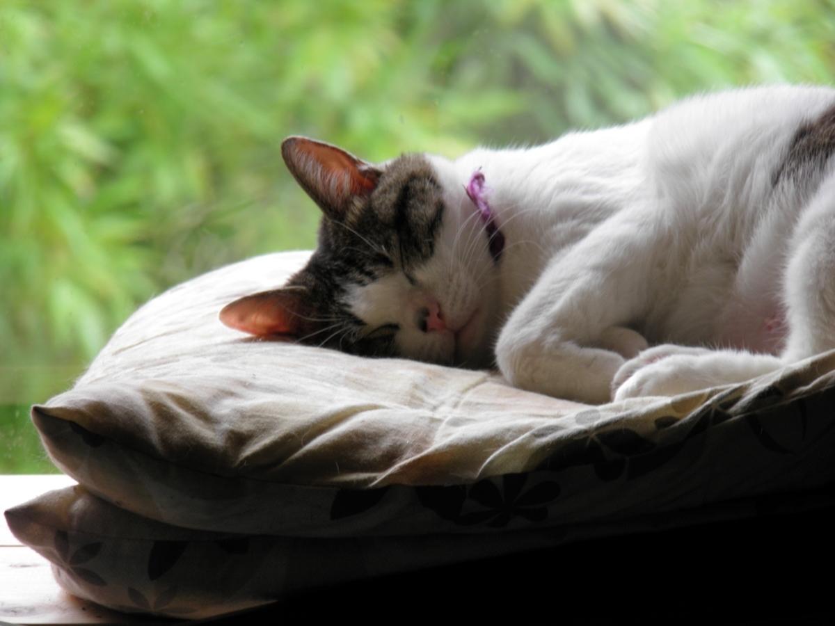 眠るブリエの写真