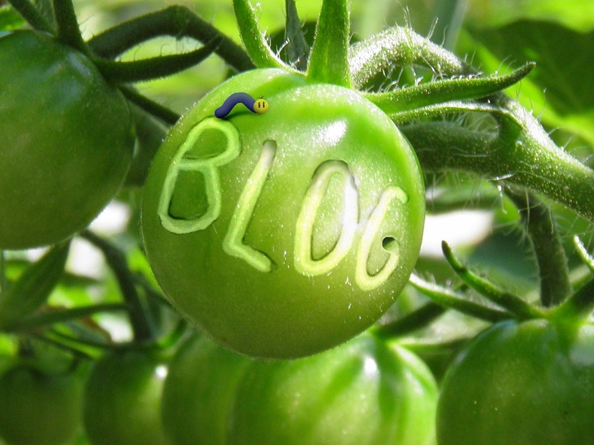 虫食いトマト