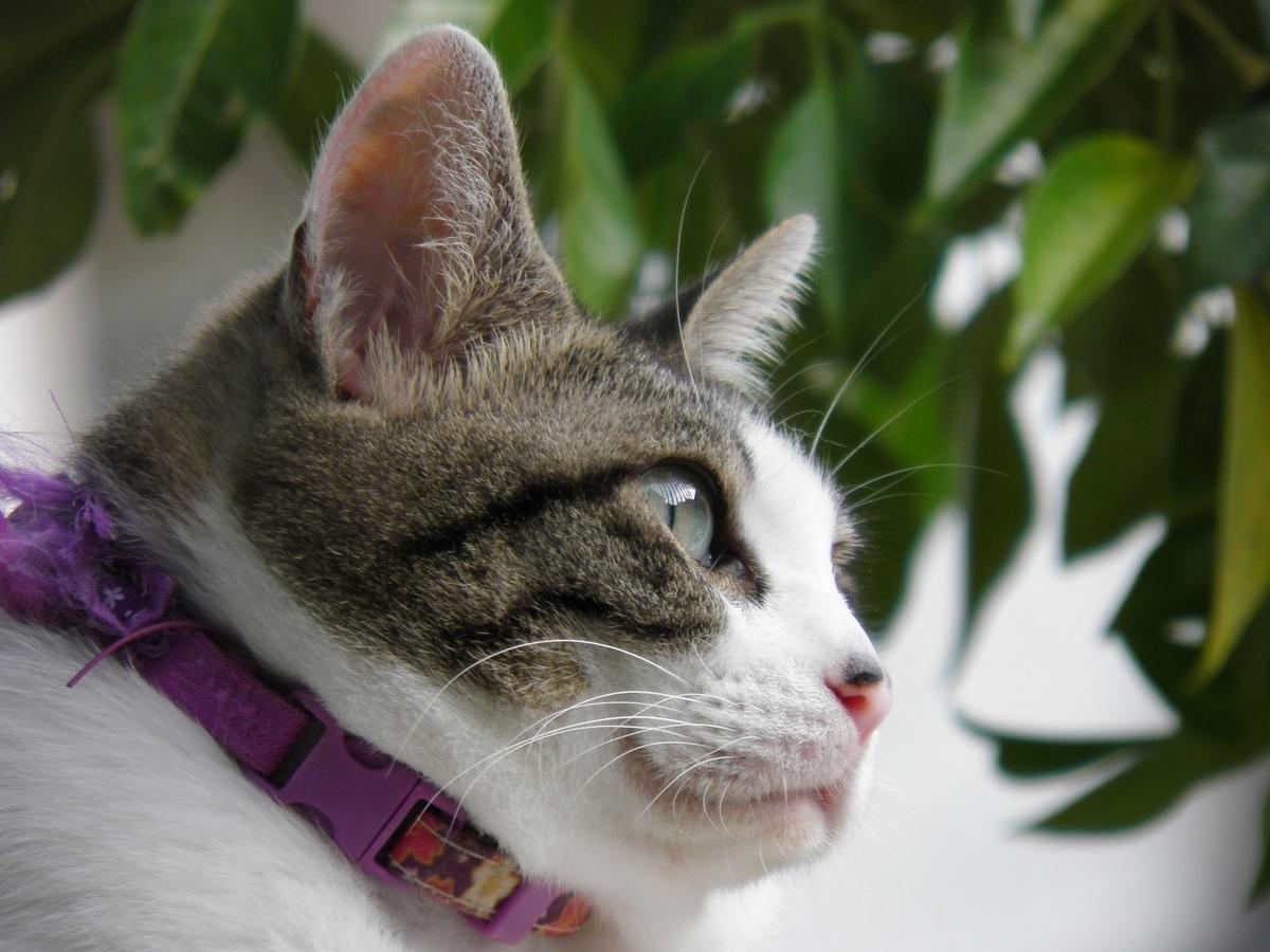 母猫ブリエの写真