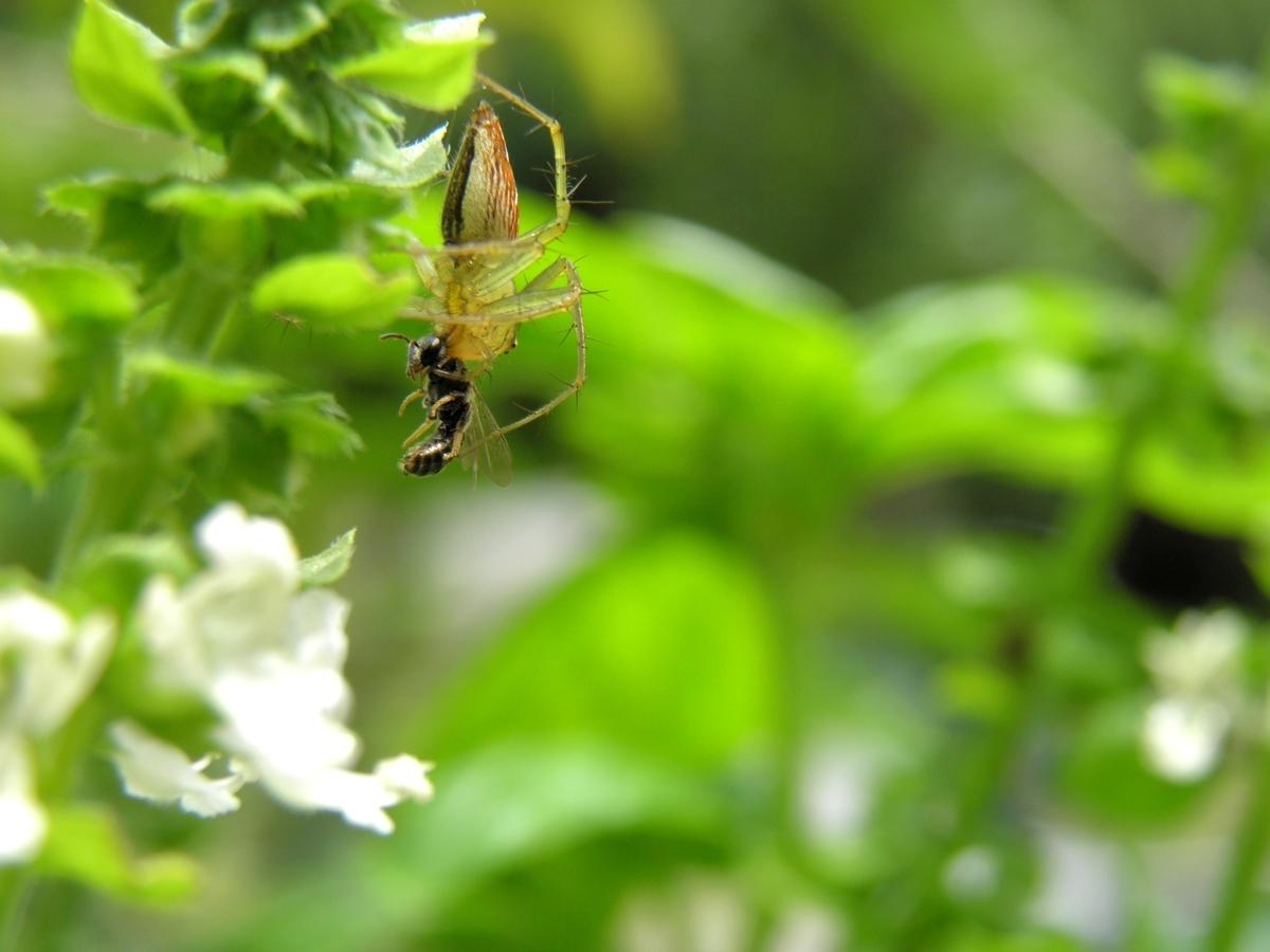ハナグモの写真