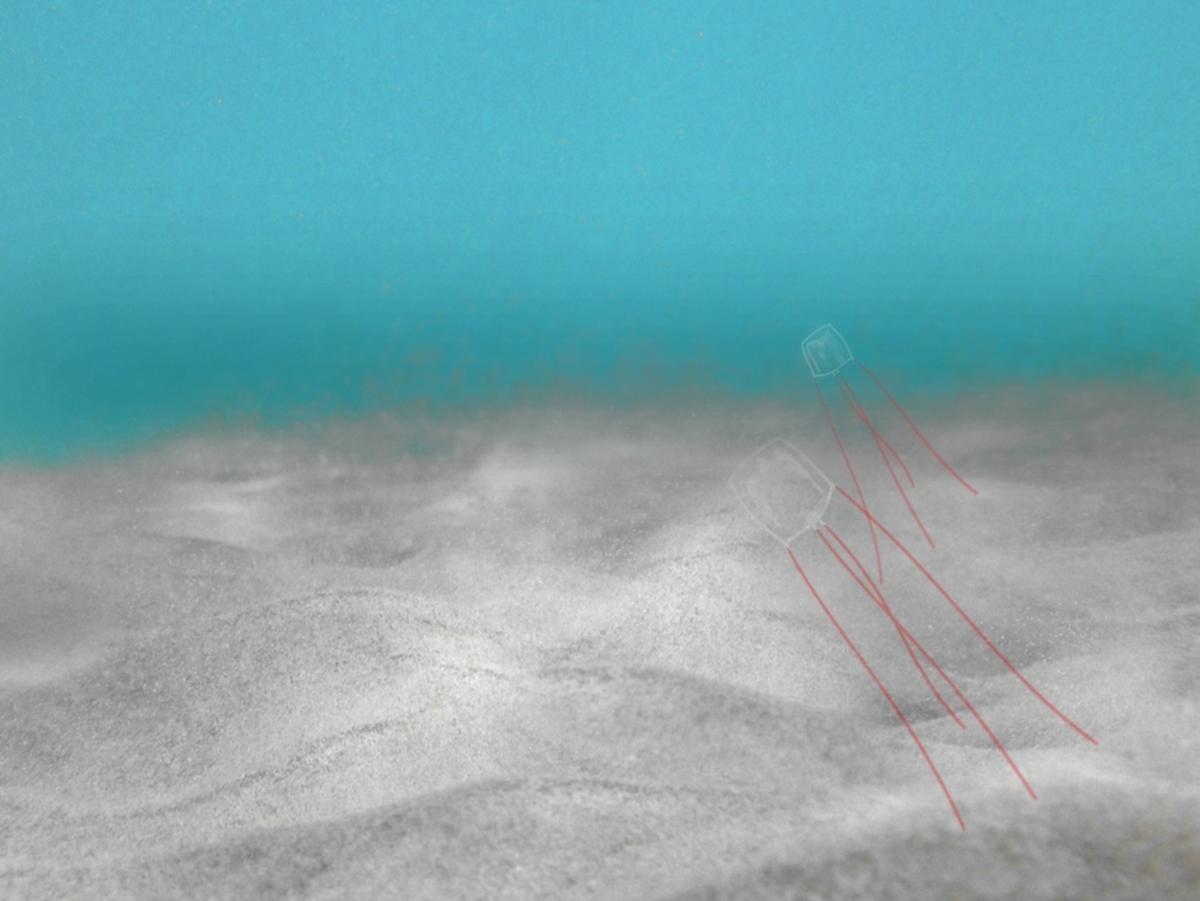 アンドンクラゲの写真