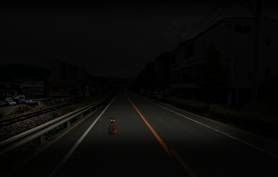 夜間道路にいる猫