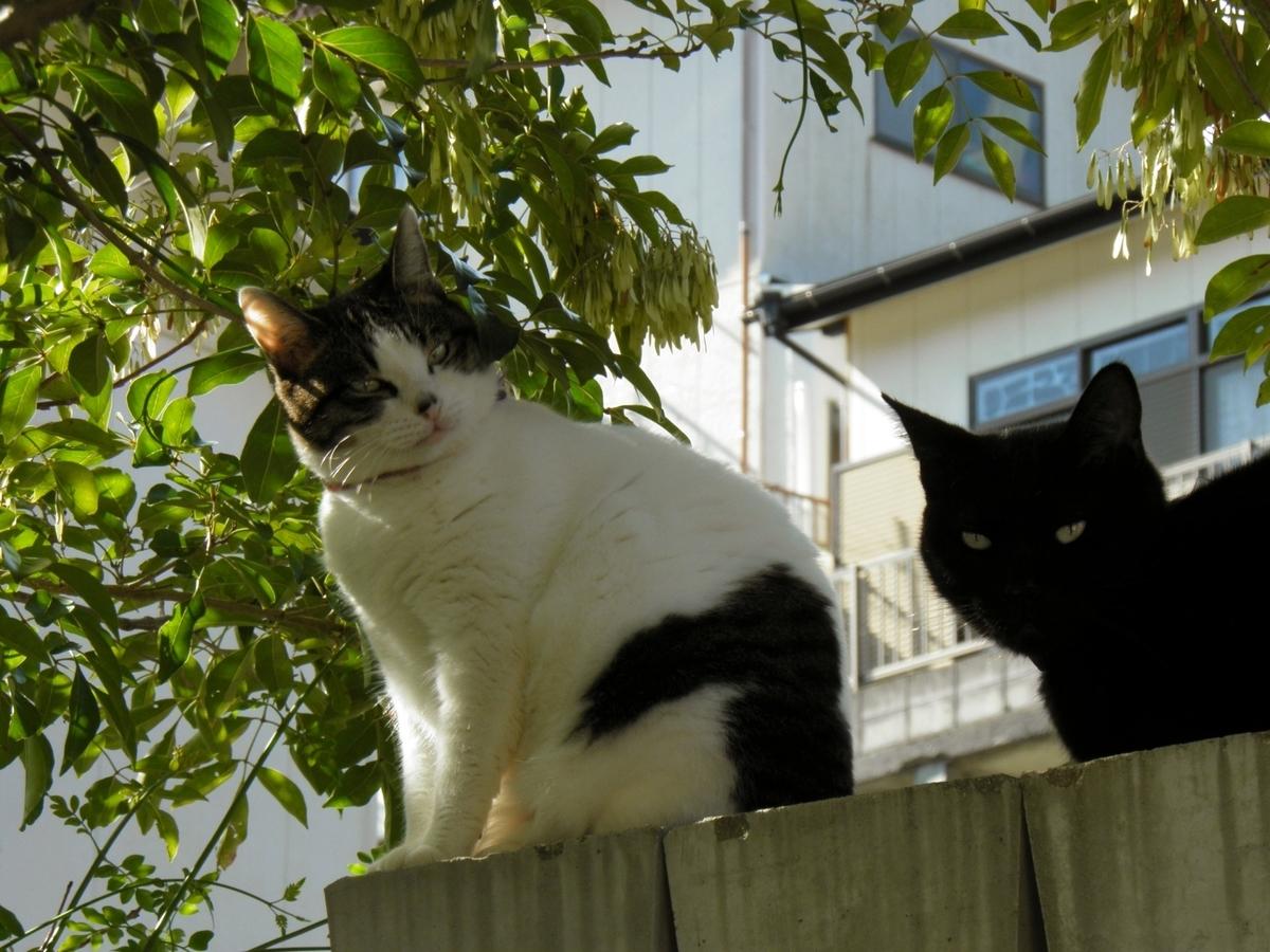 塀の上の猫2匹