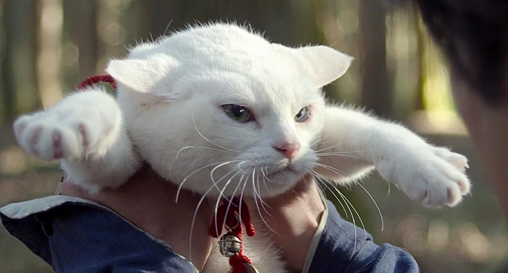 猫侍、南の島へ行く