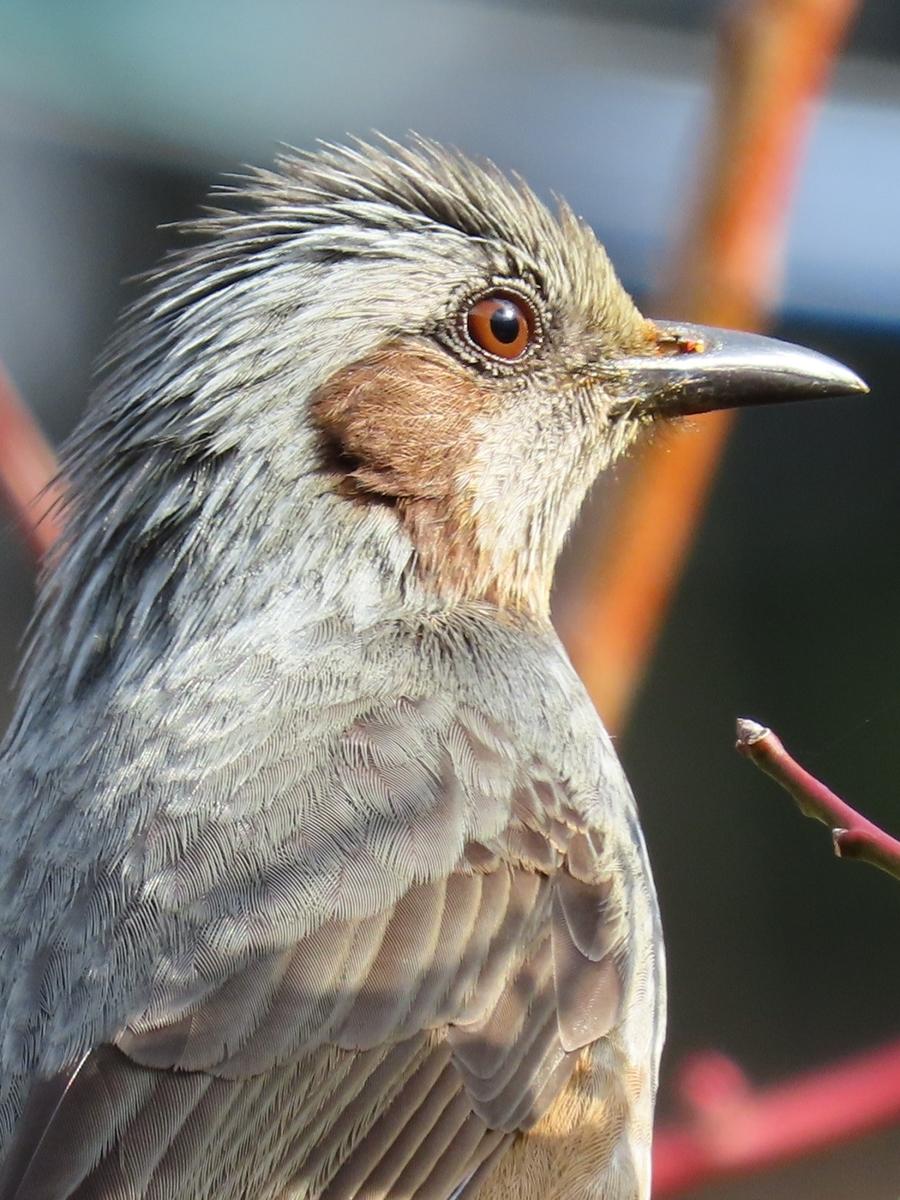 自作バードコールで鳥を呼ぶ
