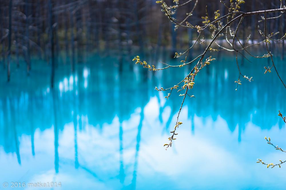 青い池(5月上旬)