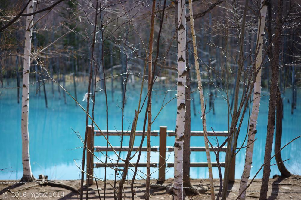 青い池5(SONYα7Ⅱ単焦点レンズ)