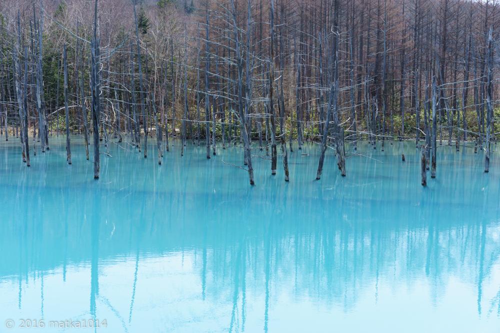 青い池7(SONYα7Ⅱ単焦点レンズ)