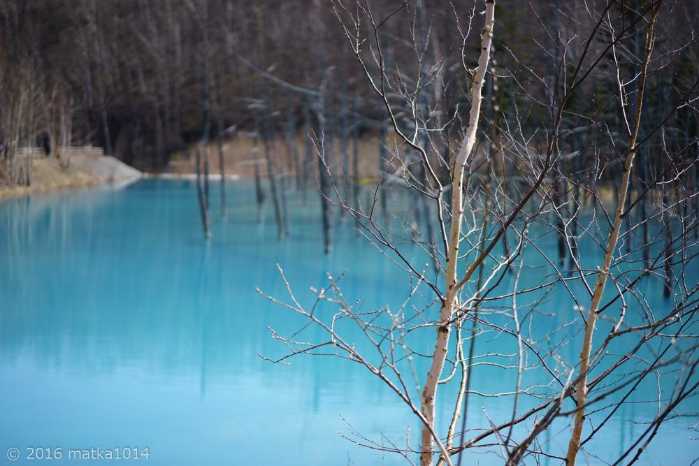 青い池9(SONYα7Ⅱ単焦点レンズ)