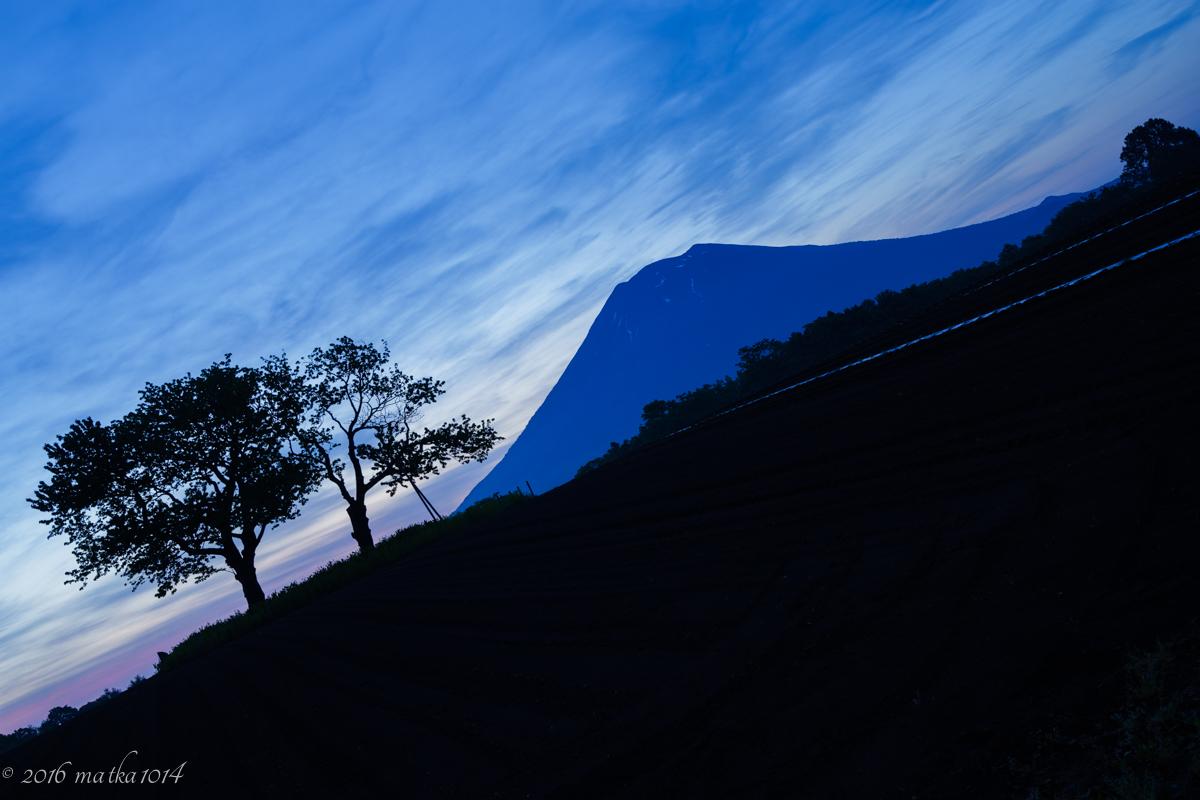 双子のさくらんぼの木と羊蹄山