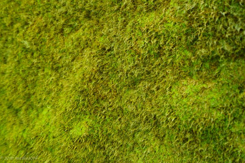 千歳市苔の回廊の苔