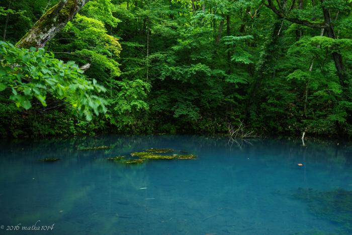 鳥沼公園の青い沼 富良野