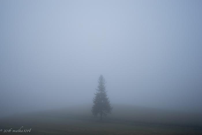 濃霧のクリスマスツリーの木