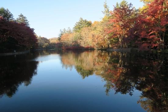 旧軽井沢の池