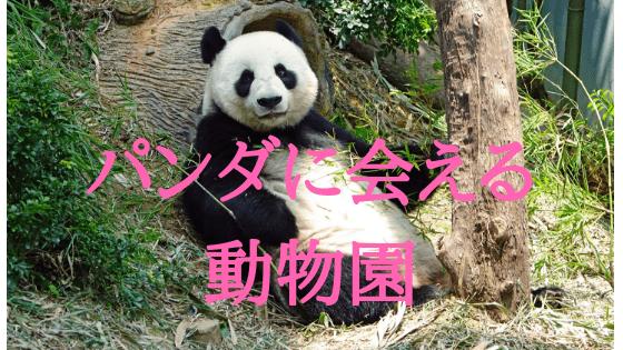 パンダ 動物園 日本