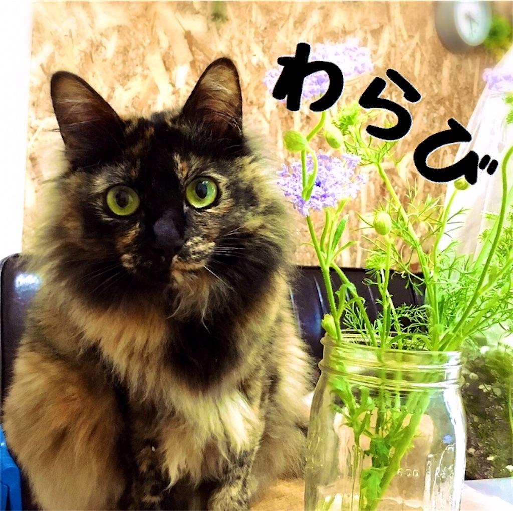 f:id:matsugorookoku:20181020004501j:image