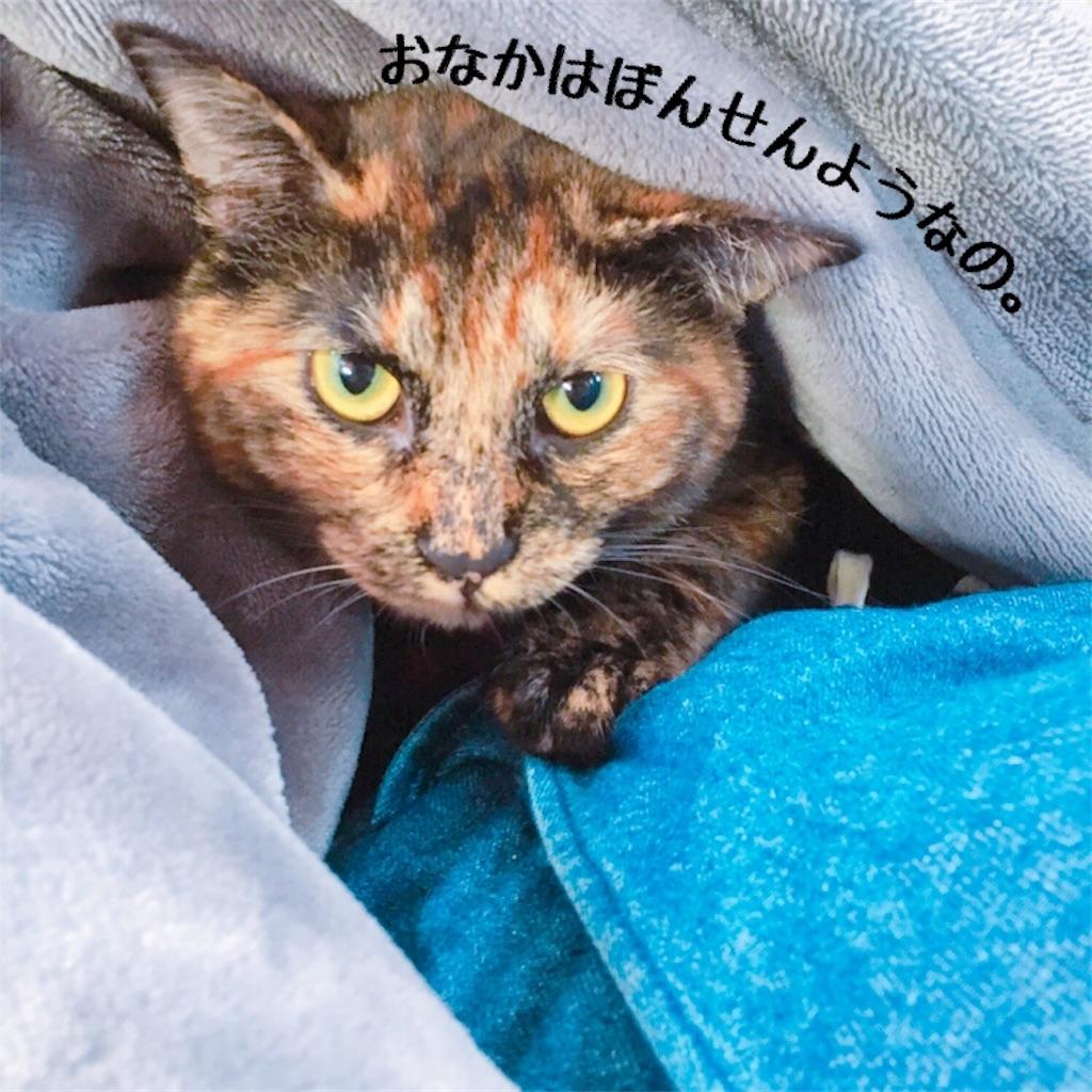 f:id:matsugorookoku:20181028151214j:image
