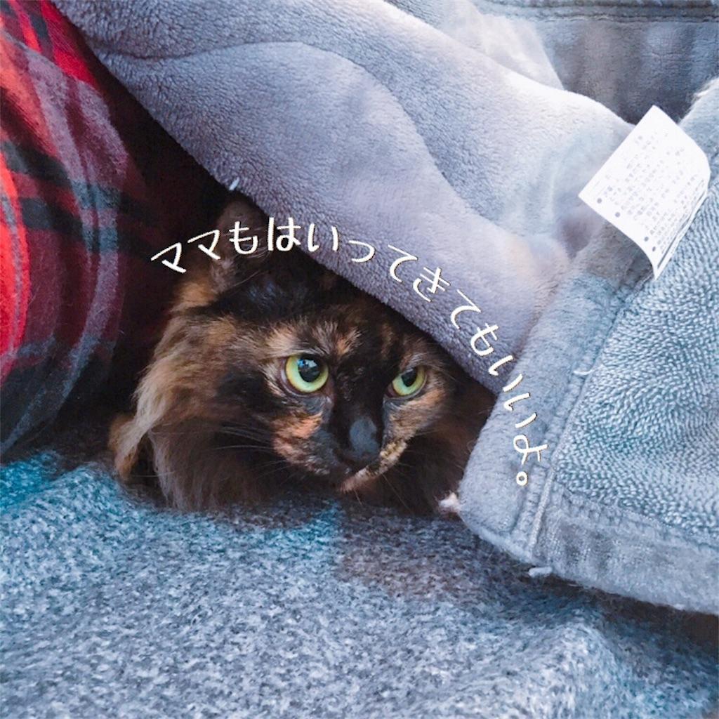 f:id:matsugorookoku:20181028151241j:image