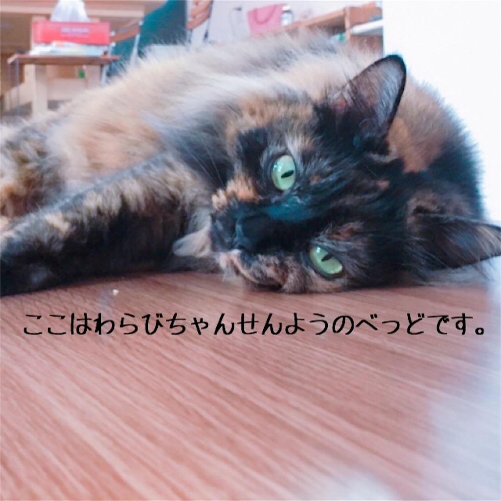 f:id:matsugorookoku:20181102225415j:image