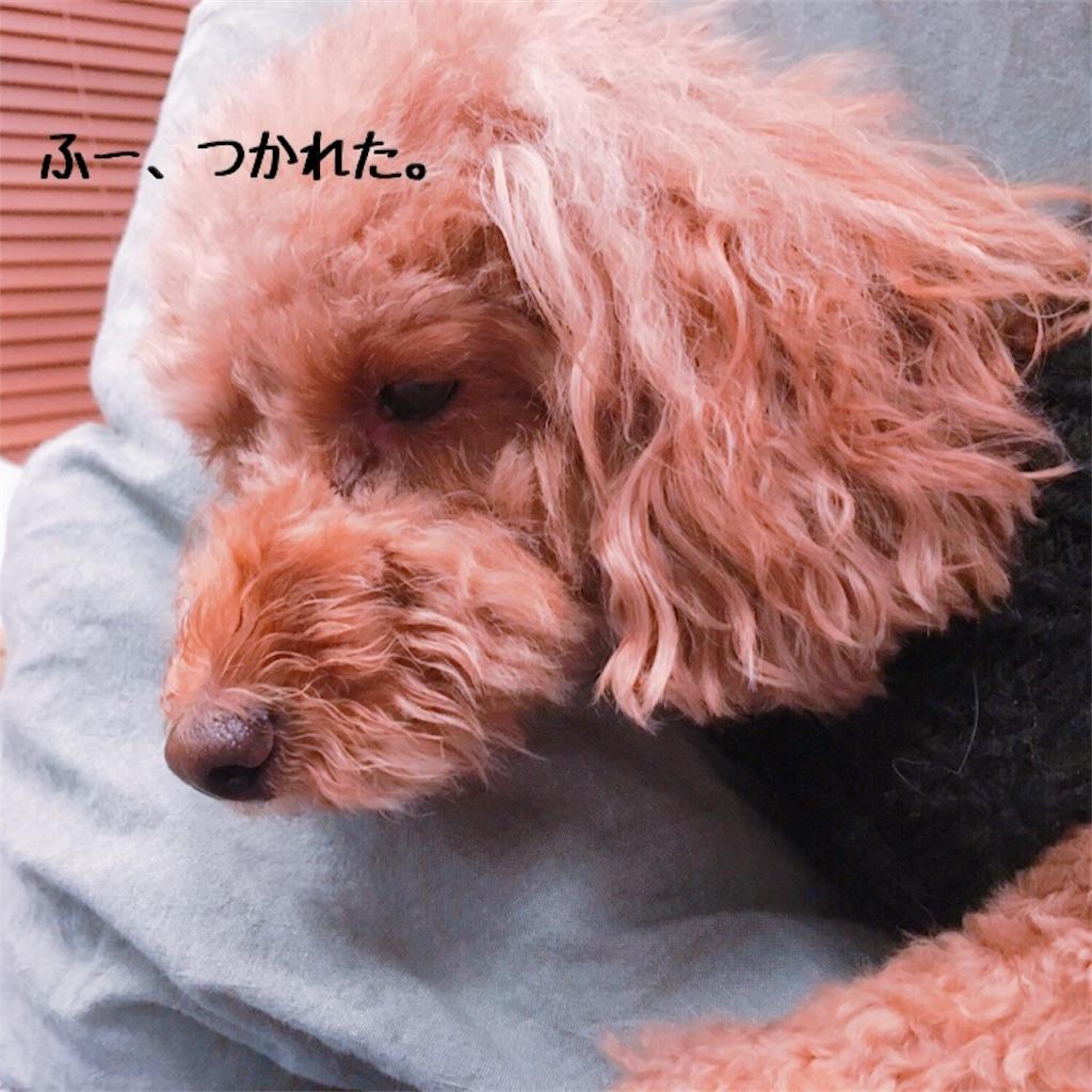 f:id:matsugorookoku:20181102233035j:image