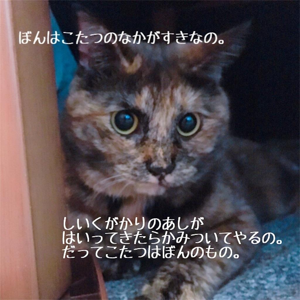 f:id:matsugorookoku:20181102233514j:image