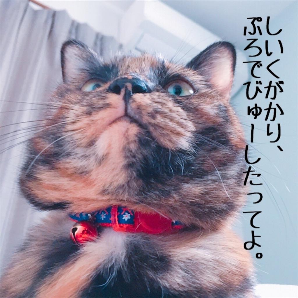 f:id:matsugorookoku:20181104090315j:image