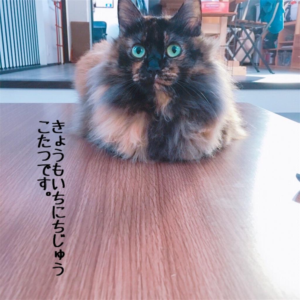 f:id:matsugorookoku:20181106000122j:image