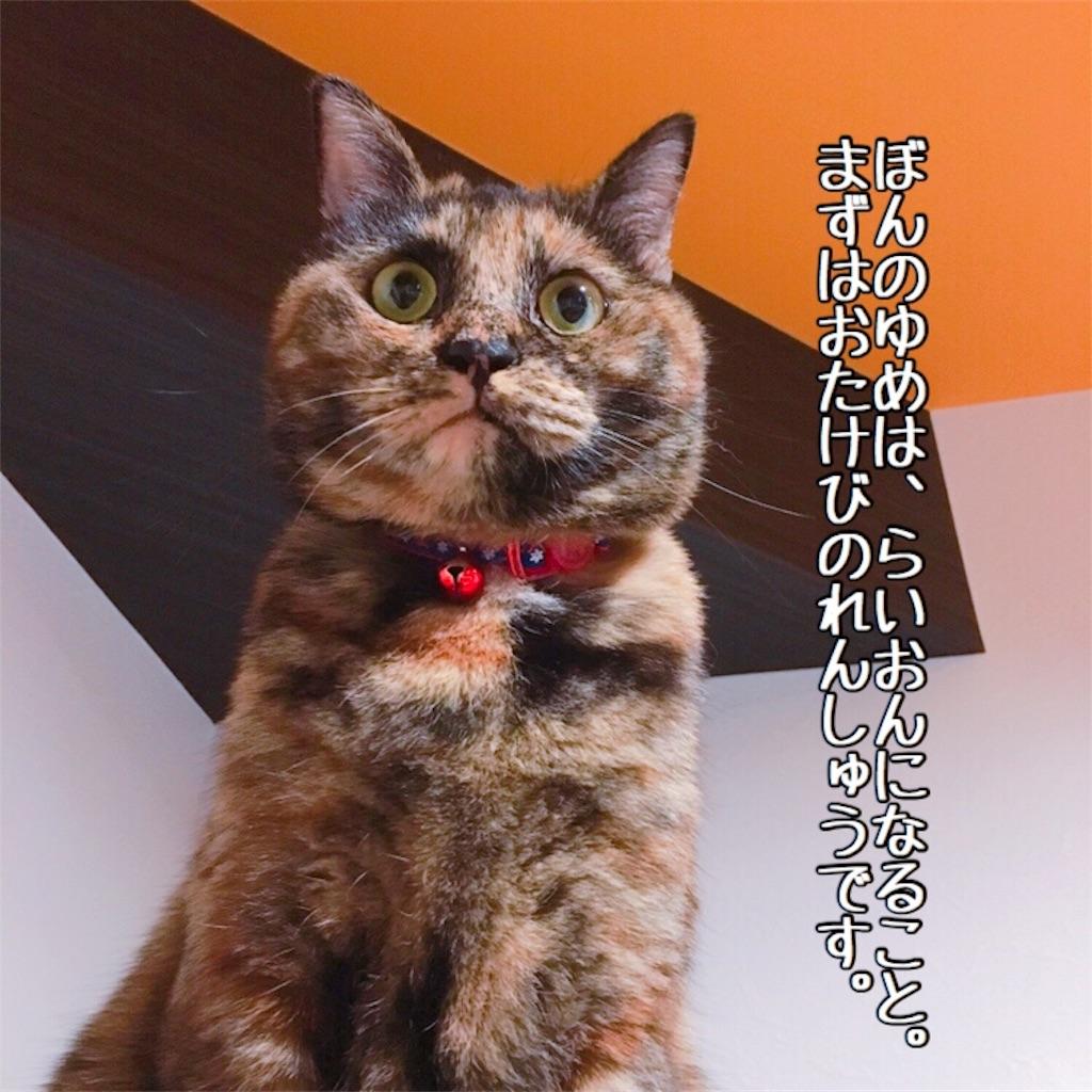 f:id:matsugorookoku:20181112232005j:image