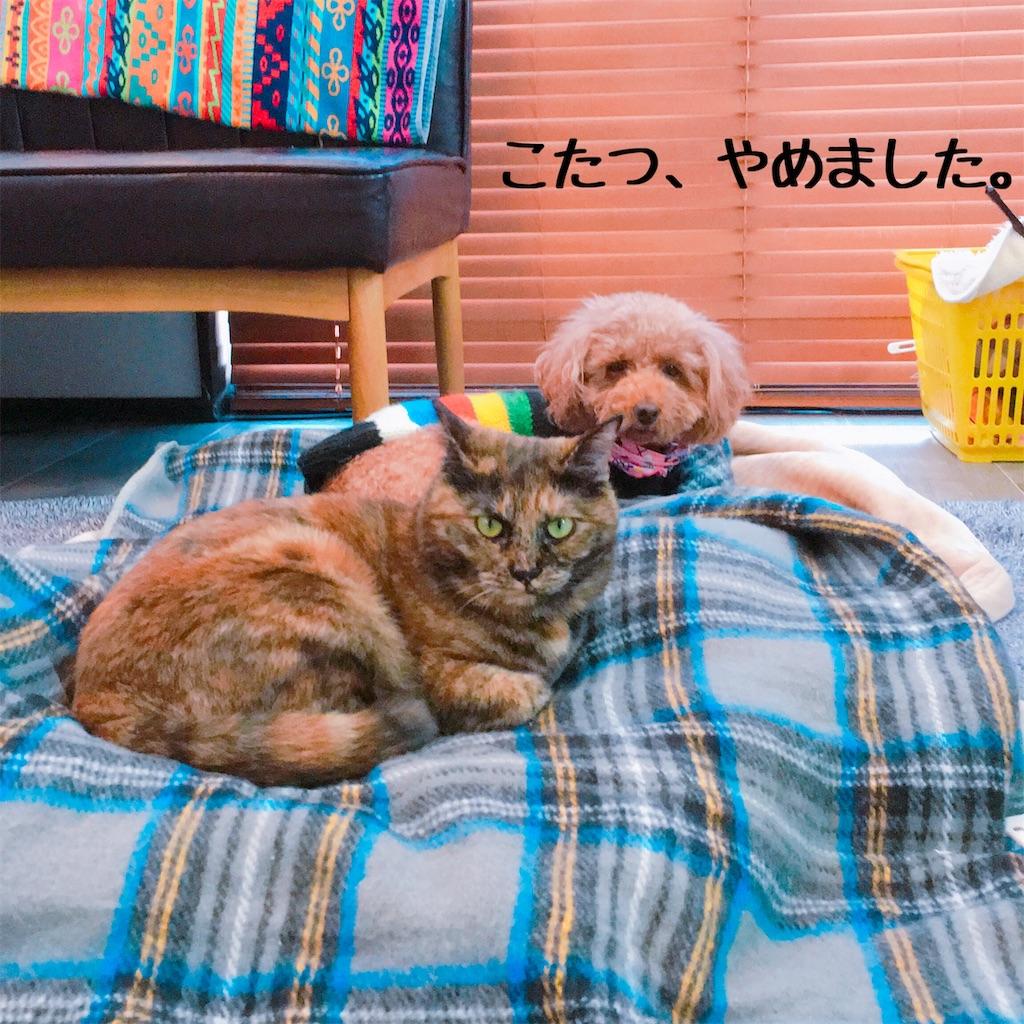 f:id:matsugorookoku:20181116221233j:image