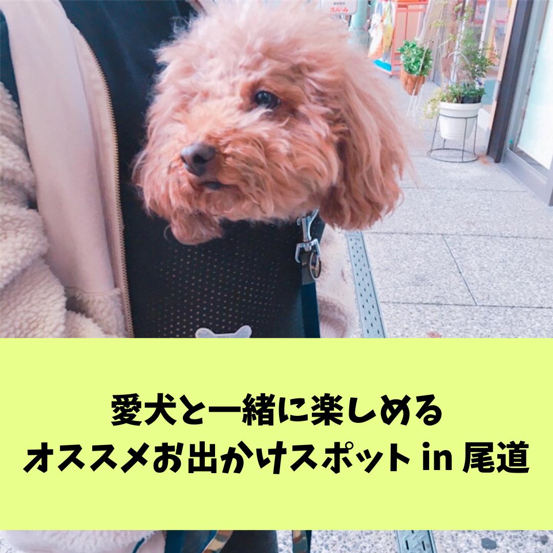 f:id:matsugorookoku:20190425121812p:plain
