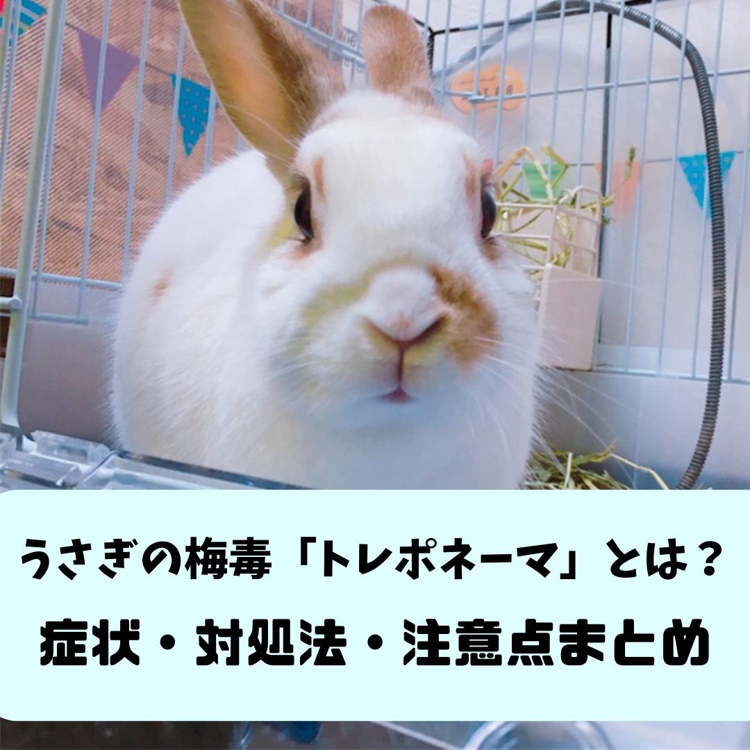 f:id:matsugorookoku:20190426112807p:plain