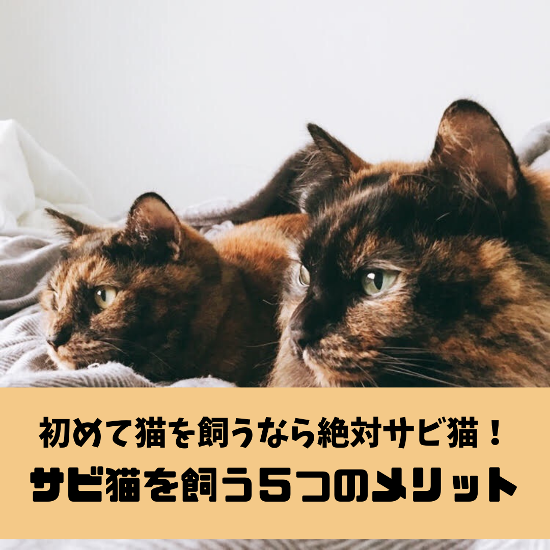 f:id:matsugorookoku:20190503002501p:plain