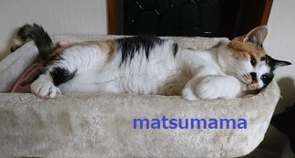 f:id:matsumama:20190116202912j:plain