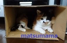 f:id:matsumama:20190116203010j:plain