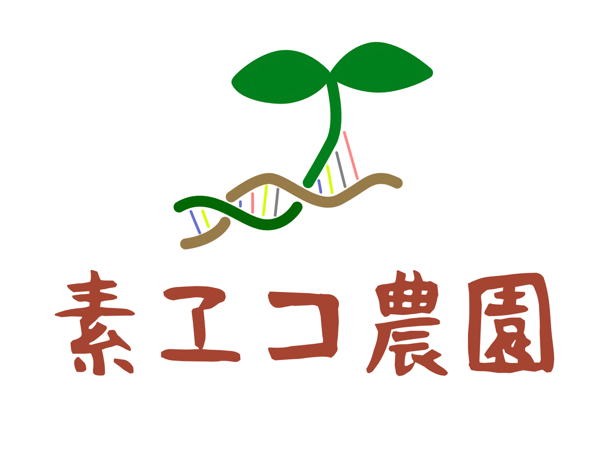 f:id:matsumo_saga:20200630202110j:plain