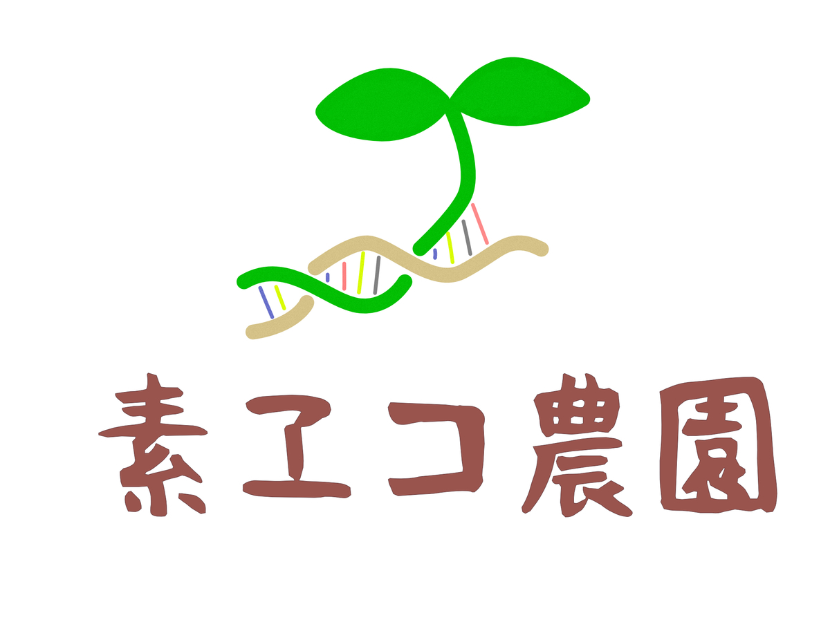 f:id:matsumo_saga:20200630204936j:plain