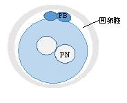 f:id:matsumotoladies:20180725154225j:plain
