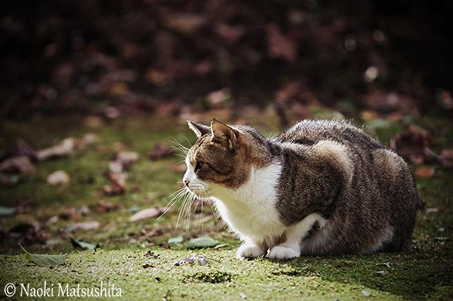 f:id:matsushita-photo:20151205194521j:plain