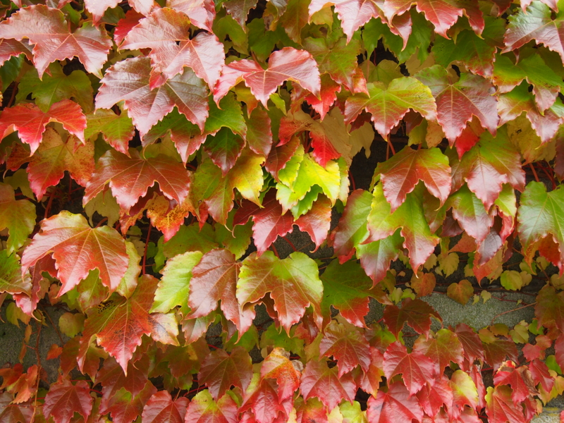 f:id:matsusun:20121030105706j:image:w640