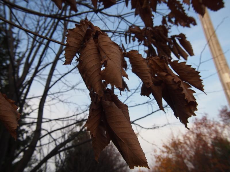 f:id:matsusun:20121121151208j:image:w640