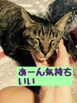 f:id:matsuuraasuka1207:20210825151617j:plain
