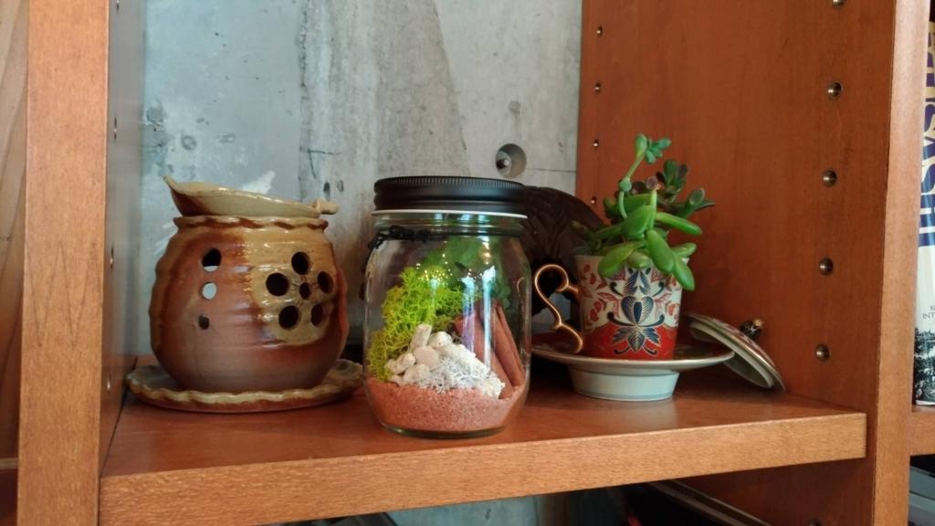 【テラリウム】小さなお庭を家の中につくってみよう