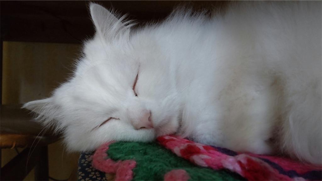 f:id:may-cat:20210807143641j:image