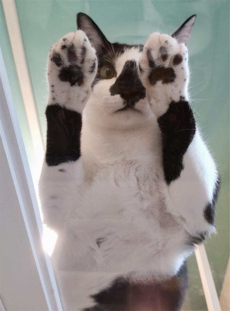 f:id:may-cat:20210809201026j:image